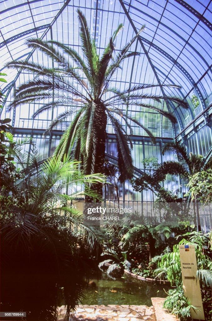 L\'intérieur tropical d\'une serre du jardin d\'Auteuil, dans le bois ...