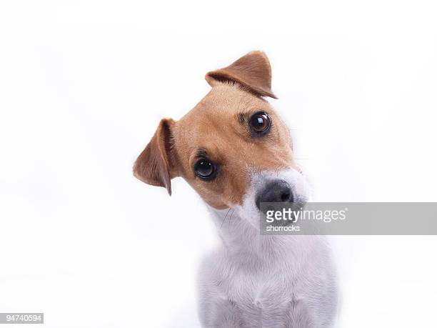 intrigued - dog stock pictures, royalty-free photos & images