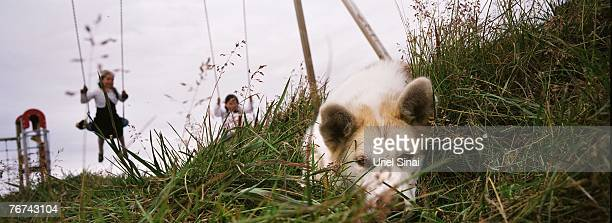 Inuit children play on the swings as a sleddog sits in the grass in the village of Ilimanaq august 27 Greenland Even though the disappearing ice cap...
