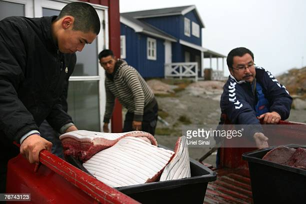 Inuit fishermen load whale meat from their truck to a fish store August 31 in the town of Ilulissat Greenland Even though the disappearing ice cap...
