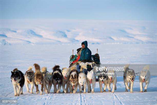 inuit hunter with dogsled team - inuit stock pictures, royalty-free photos & images