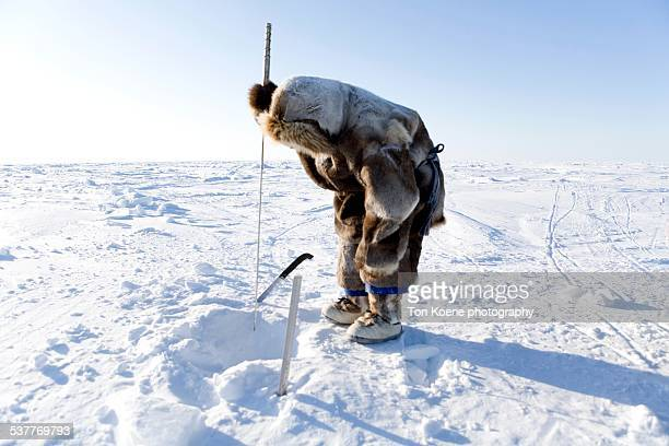 inuit man is seal huning - inuit stock pictures, royalty-free photos & images