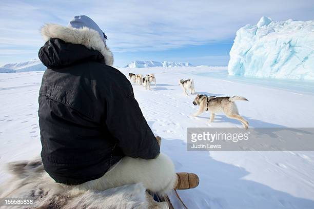 inuit man sits on sled while dogs run by iceberg - inuit stock-fotos und bilder