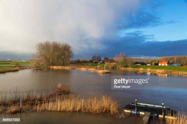 inundated foreland of dutch river meuse - meuse river stock photos and pictures