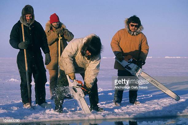 Inupiat Eskimos use chain saws to carve breathing holes into the Beaufort Sea ice off Point Barrow Alaska during the twoweek California gray whale...