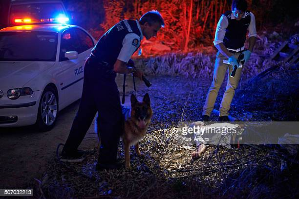 investigating the crimescene - dead dog stock pictures, royalty-free photos & images