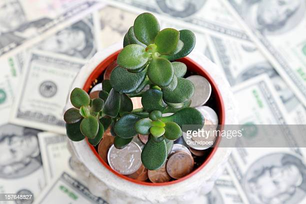 investment saving - money tree stock photos and pictures