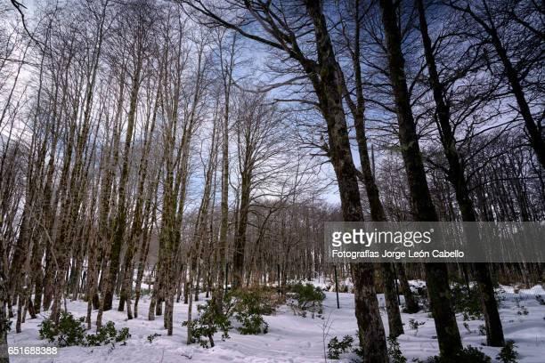 Invierno en el Parque Nacional Puyehue - Chile