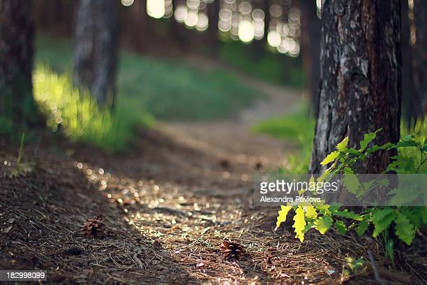 inviting path in the woods, beautiful light - alexandra pavlova stock pictures, royalty-free photos & images