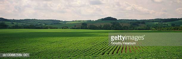 usa, iowa, dallas county, soybean field - timothy hearsum photos et images de collection