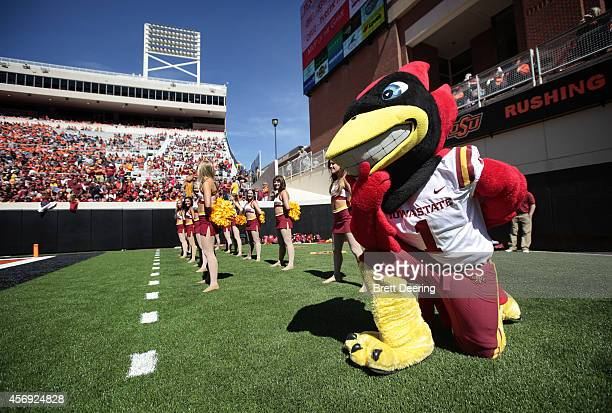 Iowa State Cyclones mascot Cy the Cardinal watches the game against the Oklahoma State Cowboys October 4 2014 at Boone Pickens Stadium in Stillwater...