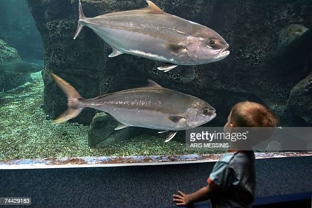 A child stands before a sea water tank containing sea life of the medeteranian sea at Cretaquarium in the city of Irakleion on the island of Crete...