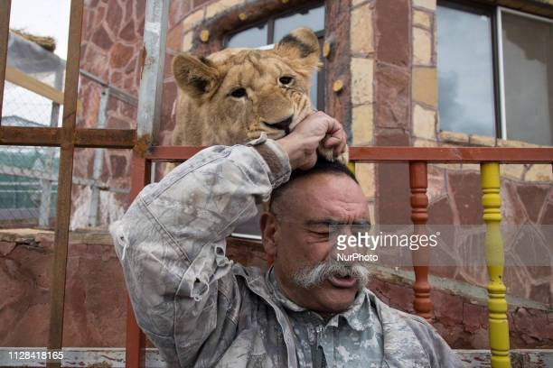 Iranian animal keeper, Nader Noori, reacts as two lion cub play with him at the Nature village in Barajin, Qazvin, Iran, on March 01, 2019. Qazvin...