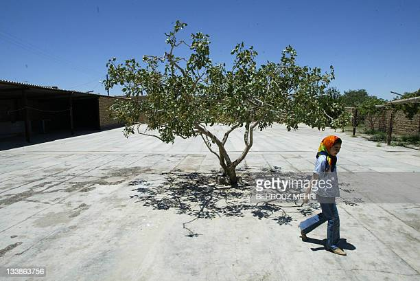 Iranian girl Saeedeh AliHosseini walks past a pistachio tree in the courtyard of the childhood home of presidential candidate Akbar Hashemi...