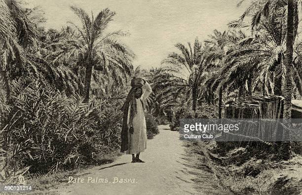 Iraqi man standing on a path between date palms, Basra, Iraq. Postcard, 1900s.