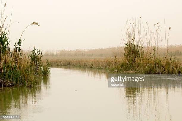 iraqi marshlands - 泥沼地 ストックフォトと画像