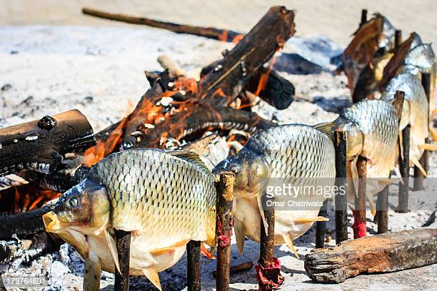 """iraqi """"masghouf"""" river carp - iraq stock pictures, royalty-free photos & images"""