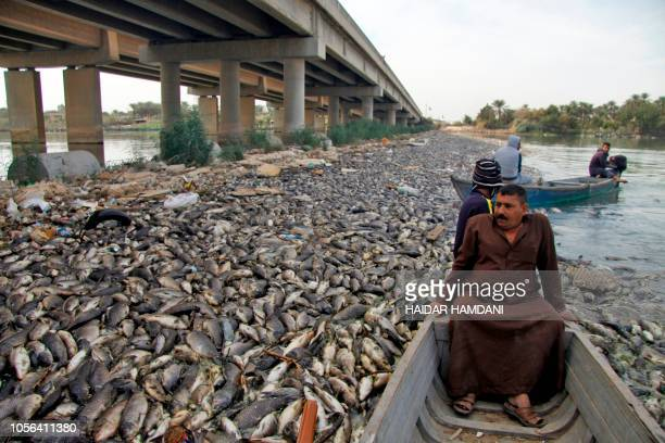 Iraqi men sail past scores of dead fish from nearby farms floating on the Euphrates river near the town of Sadat al Hindiya north of the central...