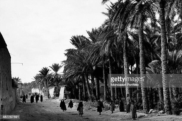 Iraqi people walking along a palm avenue Ananeh December 1956