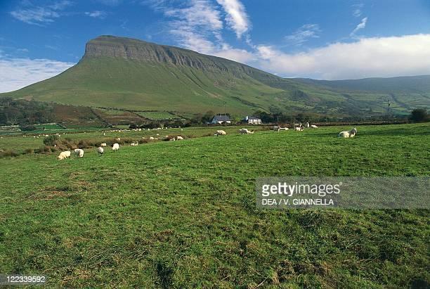 Ireland Connacht Province County Sligo Grassland at the foot of Benbulben Mountain