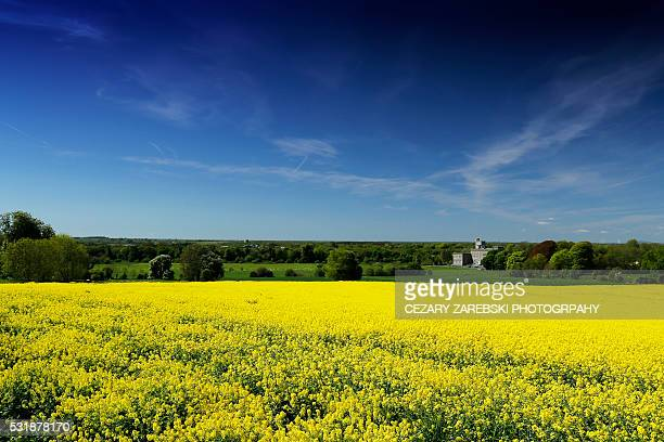 ireland country scape with abbey and gold fields - kildare stock photos and pictures