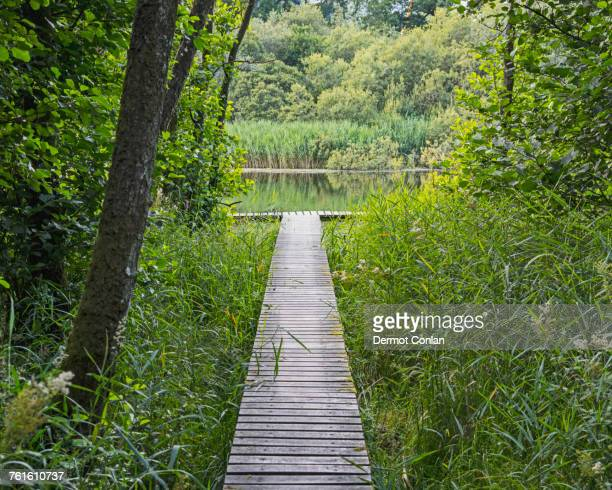 Ireland, County Cavan, Boardwalk leading to river in forest