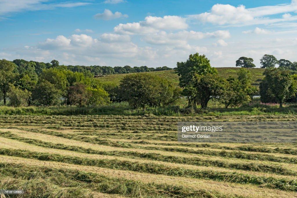 Ireland, County Cavan, Field with hay on sunny day : Stock Photo