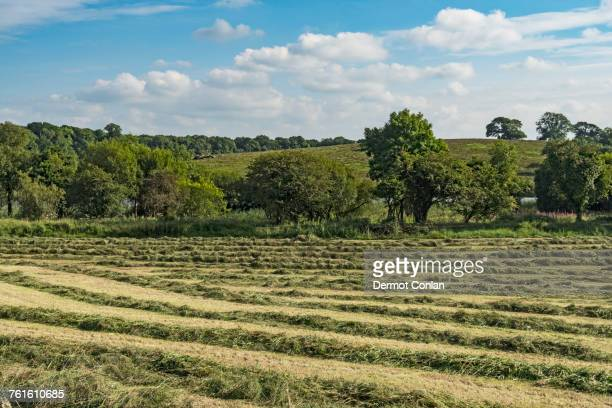 ireland, county cavan, field with hay on sunny day - cavan images foto e immagini stock