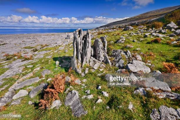 Ireland County Clare The Burren General view of the rocky limestone landscape at Black Head