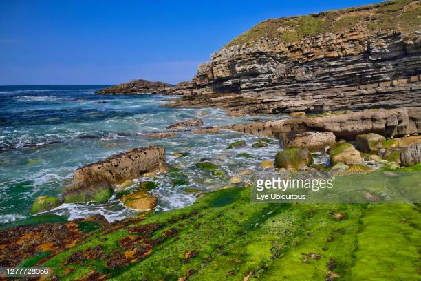 Ireland County Sligo Mullaghmore Rocky coastline with cliff and seaweed in the foreground