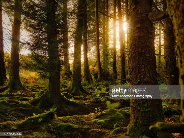 ireland forest #2 - ティッペラリー州 ストックフォトと画像