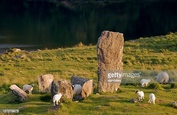 ireland: standing stones,  sheep on the ring of kerry - ring of kerry stock photos and pictures