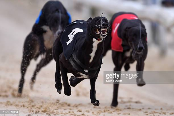Irenes Nod wins the sixth race at Brighton and Hove Stadium on March 23 2016 in Brighton England
