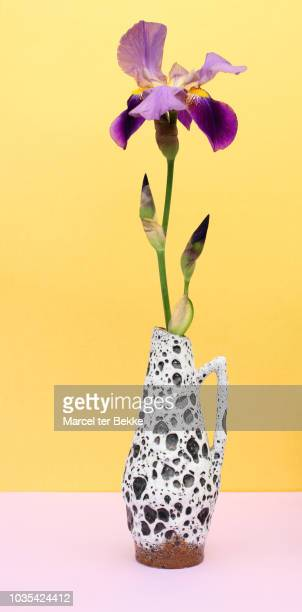 iris flower in vintage seventies vase - ceramic stock photos and pictures
