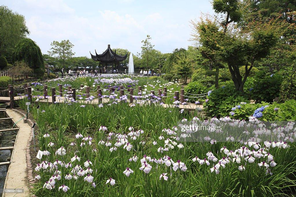 Iris Garden of Suigetsu Park, Ikeda, Osaka, Japan : Stock Photo