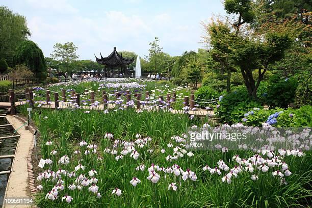 iris garden of suigetsu park, ikeda, osaka, japan - fukui prefecture stock photos and pictures