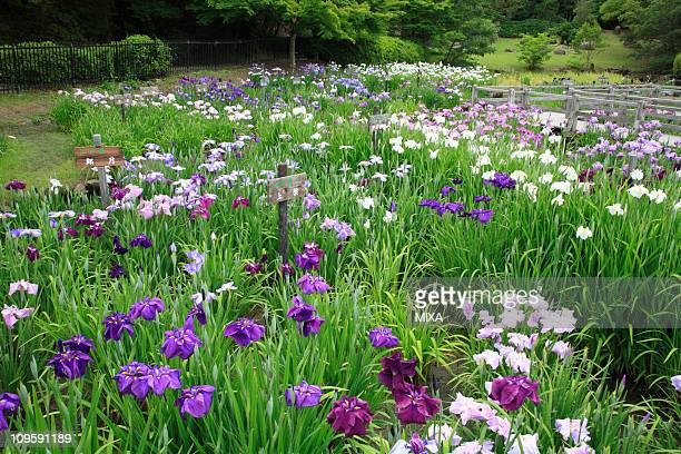 Osaka Garden Stock Photos and Pictures   Getty Images