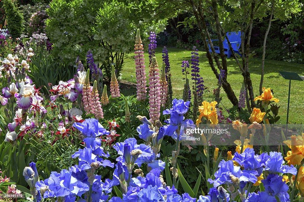 Iris Garden : Stock Photo