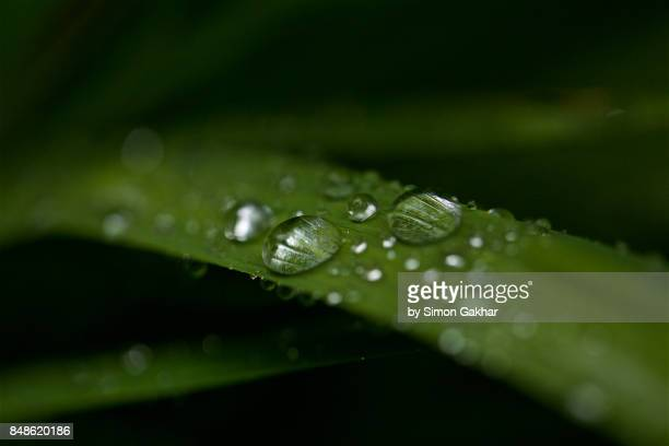 Iris Leaf with Droplets at High Resolution Showing Extreme Detail