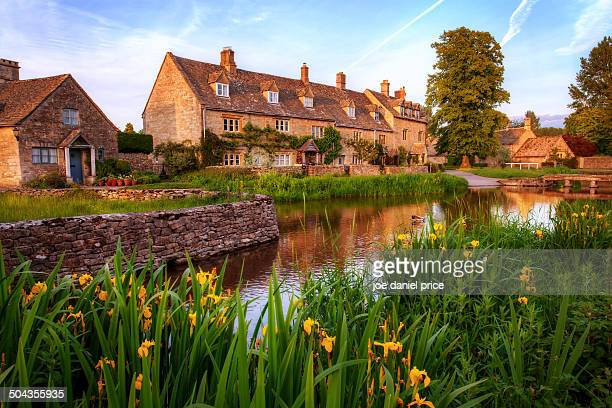 Irises at Lower Slaughter, Cotswolds, England