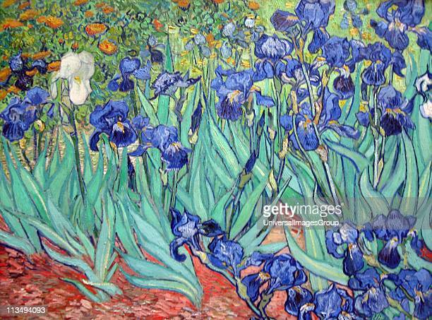 Irises is a painting by Vincent van Gogh 1853 1890 Dutch postImpressionist painter Irises was painted while Vincent van Gogh was living at the asylum...