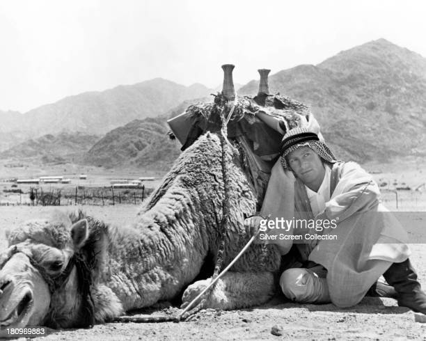 Irish actor Peter O'Toole and his camel on the set of 'Lawrence Of Arabia', directed by David Lean, 1962.