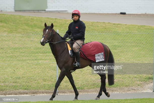 Irish galloper US Navy Flag exercises at Canterbury Park Quarantine Centre ahead of competing in The Everest on September 24 2018 in Sydney Australia