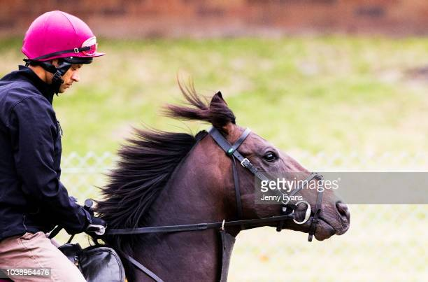 Irish galloper US Navy Flag exercises at Canterbury Park Quarantine Centre with stablemate Someset Maugham ahead of competing in The Everest on...