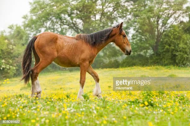 Irish horse on sunny summer day in Tipperary fields. Ireland
