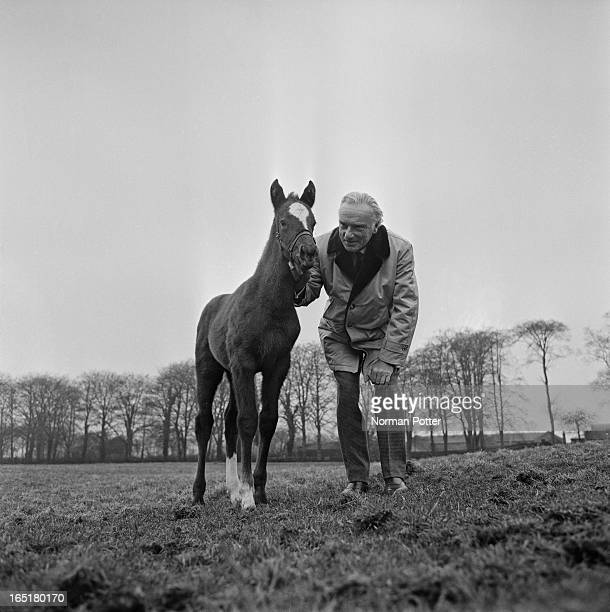 Irish horse racing commentator for the BBC, and Daily Express racing correspondent, Peter O'Sullevan with a racehorse foal, 12th March 1969.