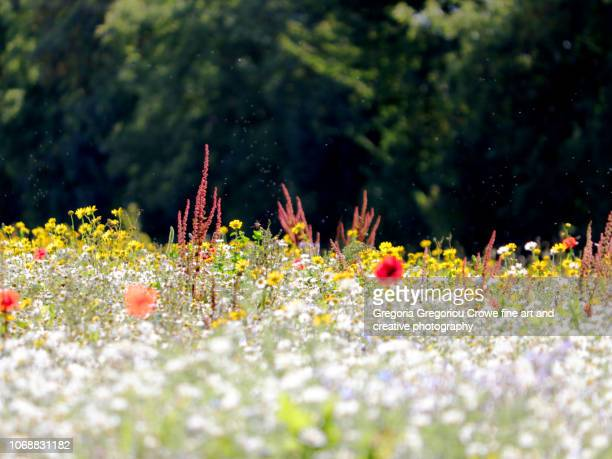 irish meadow - gregoria gregoriou crowe fine art and creative photography. stock pictures, royalty-free photos & images