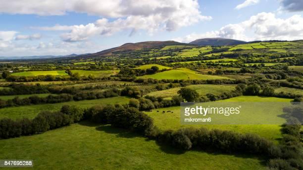 Irish rural scene on sunny summer day in Tipperary fields. Ireland