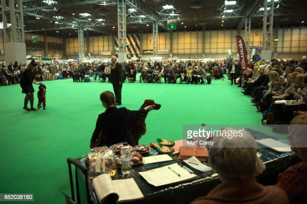 Irish Setter is judged on the third day of Crufts Dog Show at the NEC Arena on March 11 2017 in Birmingham England First held in 1891 Crufts is said...