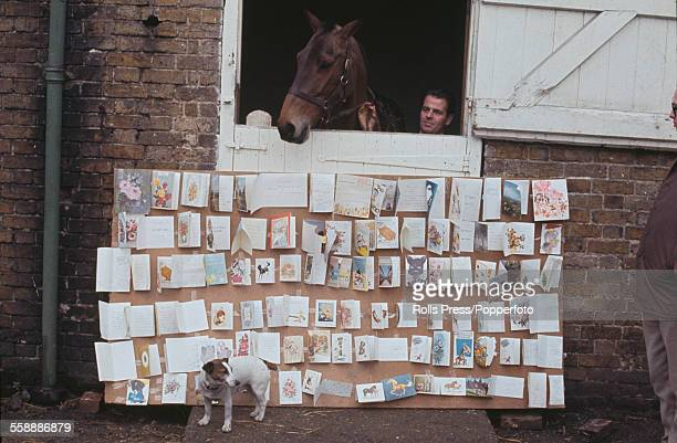 Irish thoroughbred racehorse Arkle pictured at his stable door during a period of recovery after fracturing a pedal bone in a race at Kempton Park...
